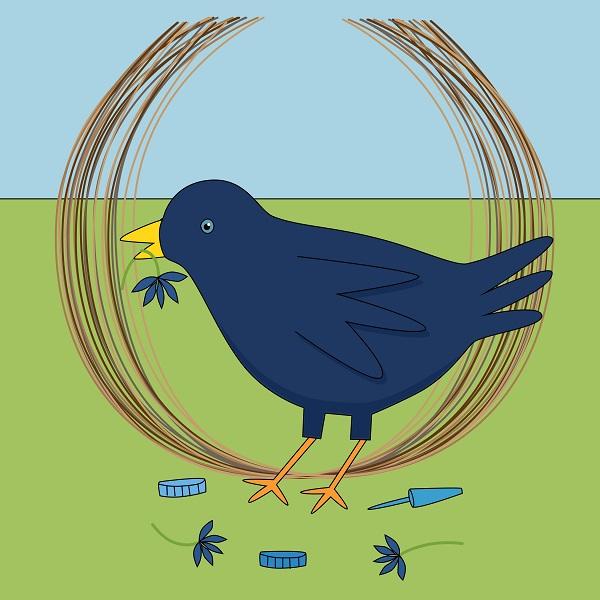 12-Bower-bird-LI